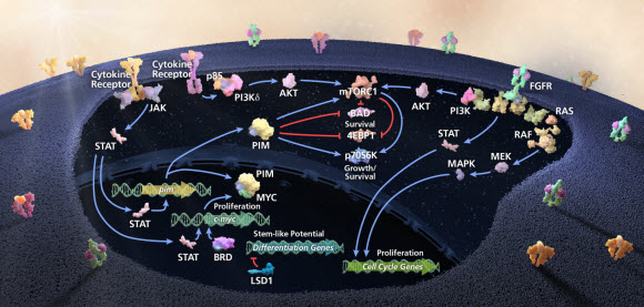 Image of Targeted therapy Discovery visual which shows Incyte's targeted therapy discovery strategy emphasizes the prosecution of therapeutic intervention points that lie in inter-dependent oncogenic pathways.